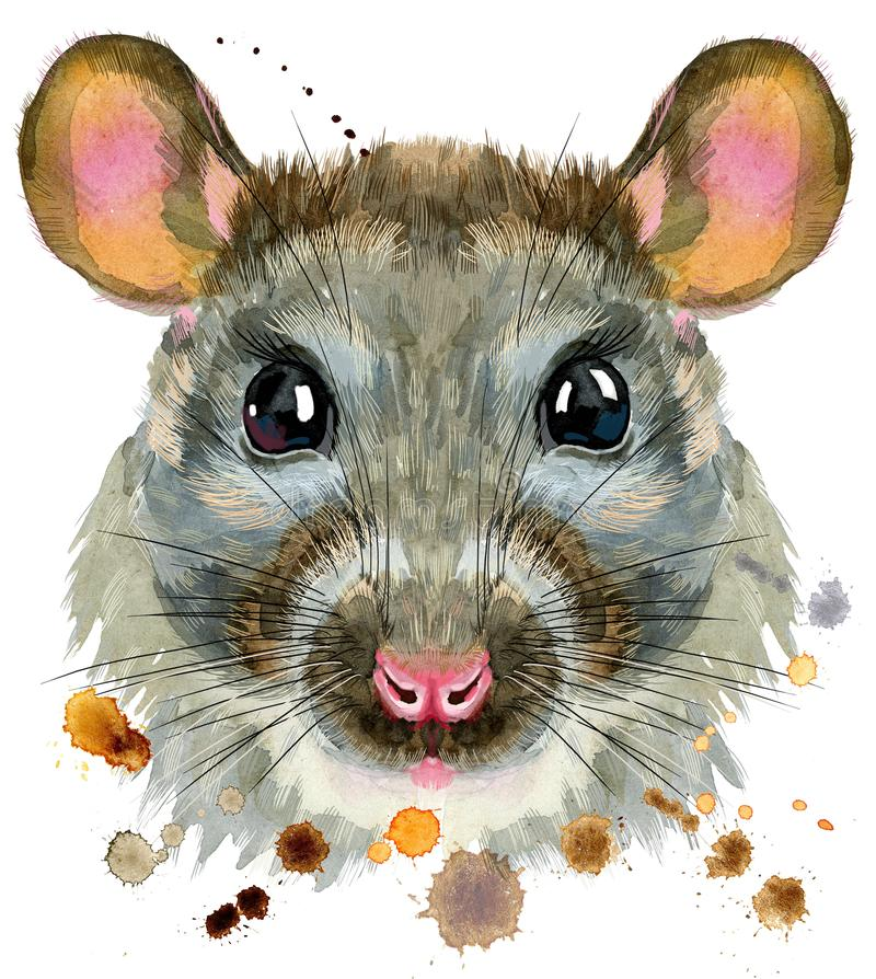 O retrato da aquarela do rato com espirra