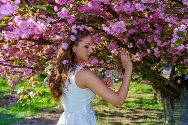 O retrato da mulher atrativa nova com as flores cor-de-rosa em seu cabelo est? no vestido branco na flor sakura no parque na mola fotos de stock