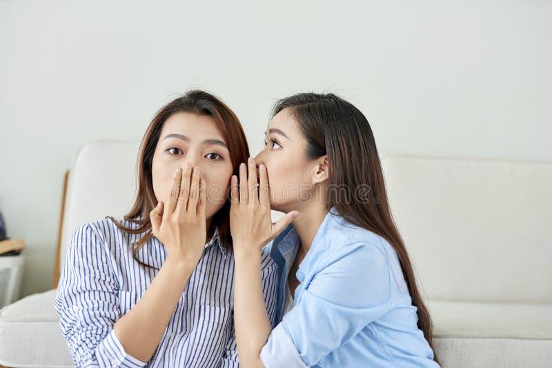 O retrato de duas mulheres felizes atrativas novas com bisbilhota sussurros um mistério secreto no estúdio na sala de visitas E fotografia de stock