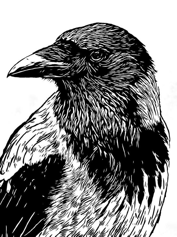 O retrato de um corvo com cabeça girou a vista em i preto e branco ilustração royalty free