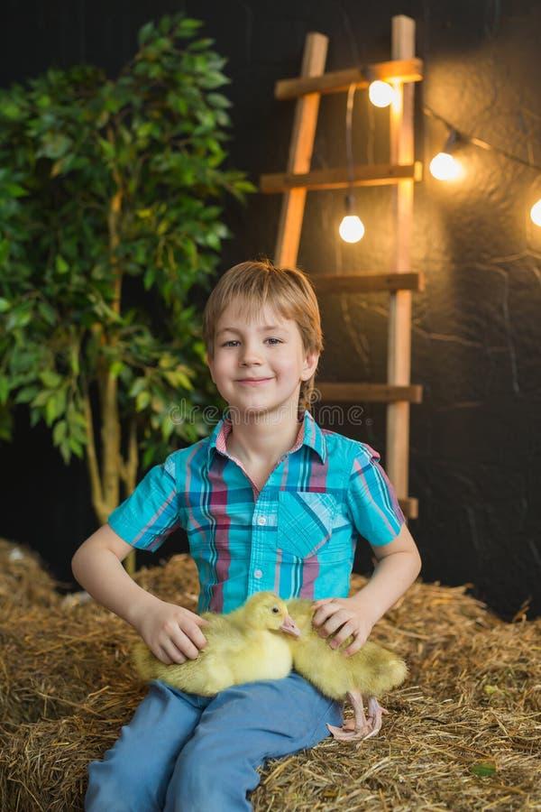 O retrato de um menino bonito em uma camisa azul guarda o ganso em uma exploração agrícola imagens de stock