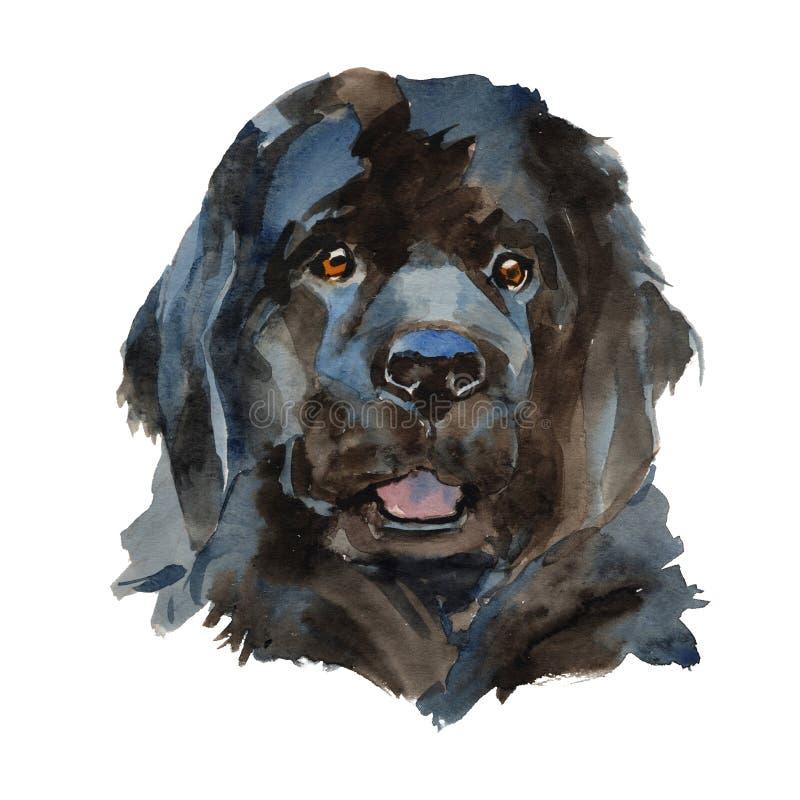 O retrato do cão de Terra Nova ilustração stock