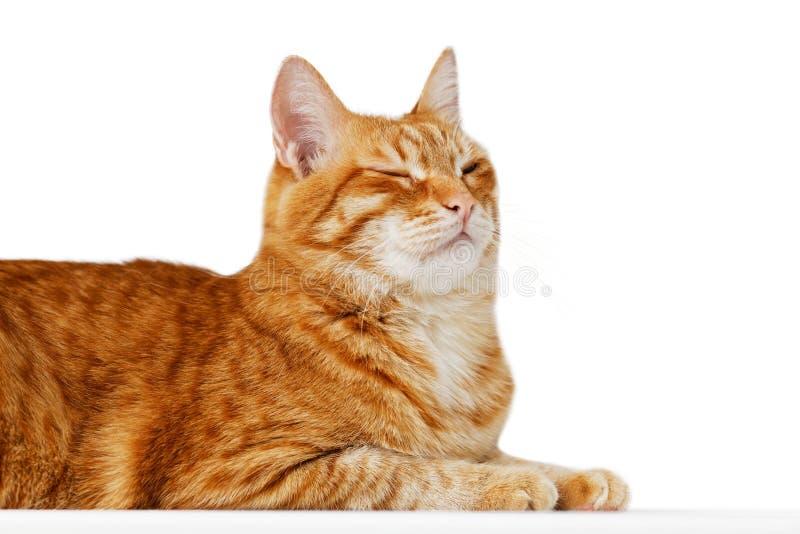 O retrato do close up de um gato vermelho parafusou acima seus olhos fotos de stock