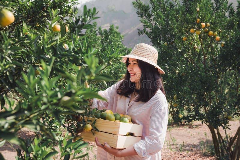 O retrato do fazendeiro atrativo Woman é colher alaranjada na exploração agrícola orgânica, menina alegre na emoção da felicidade imagem de stock