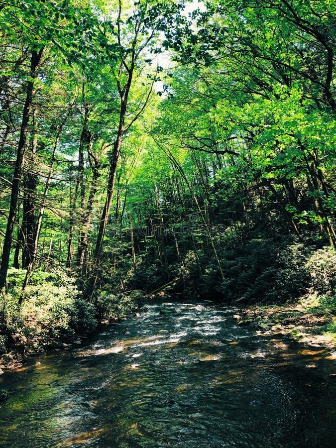 O ribeiro das quedas de Dingmans está correndo através da madeira fotografia de stock