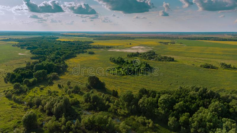 o rio antigo transformou-se uma floresta fotos de stock royalty free