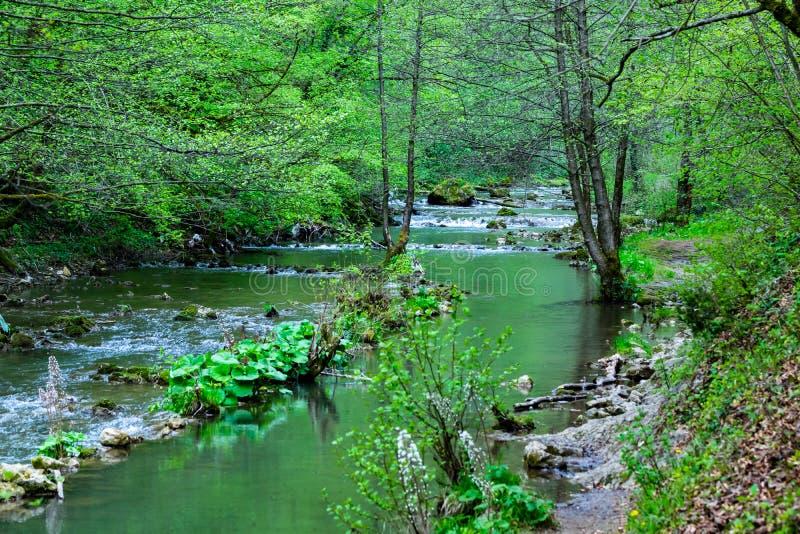 O rio Bliha em Bósnia imagem de stock