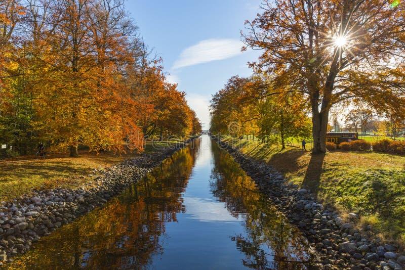 O rio entre Brown folheou árvores durante o dia imagem de stock