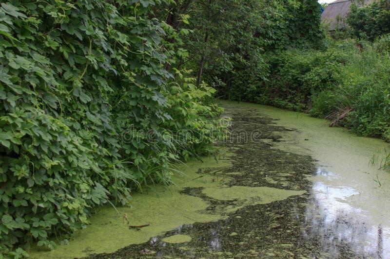 O rio inundado imagem de stock