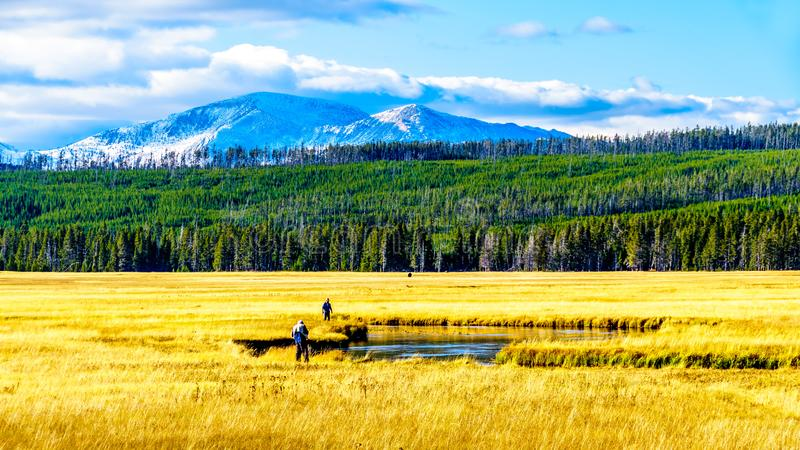 O rio Madison, à medida que passa através das Grasslands no Parque Nacional de Yellowstone, em Wyoming, EUA fotos de stock royalty free