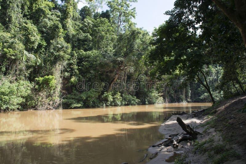 O rio o maior na selva tropical, Malásia foto de stock