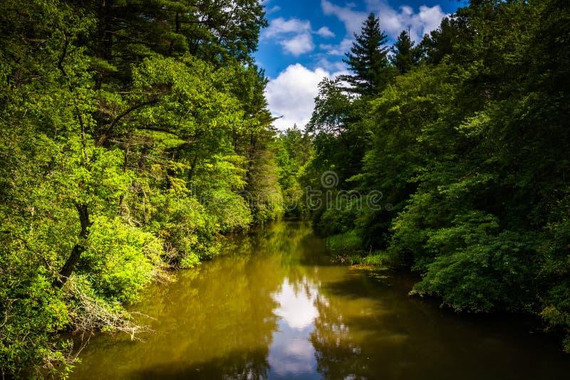 O rio pequeno, na floresta do estado de Du Pont, North Carolina fotografia de stock
