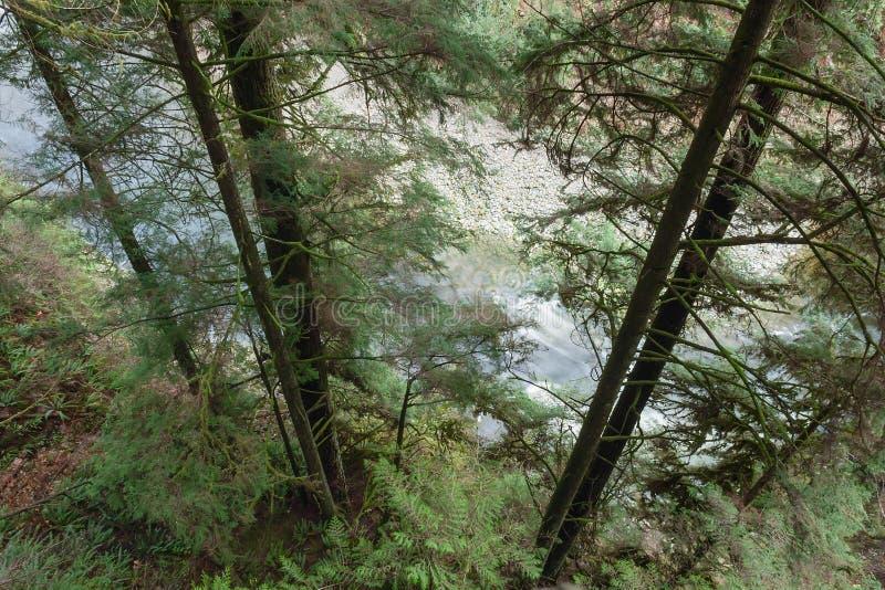 O rio que corre através da floresta densa, parque do rio de Capilano, BC, pode imagem de stock