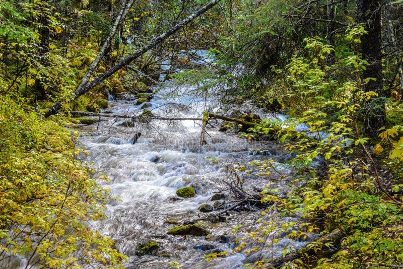 O rio que flui abaixo da montanha cercada em rochas e outono coloriu as folhas imagem de stock royalty free