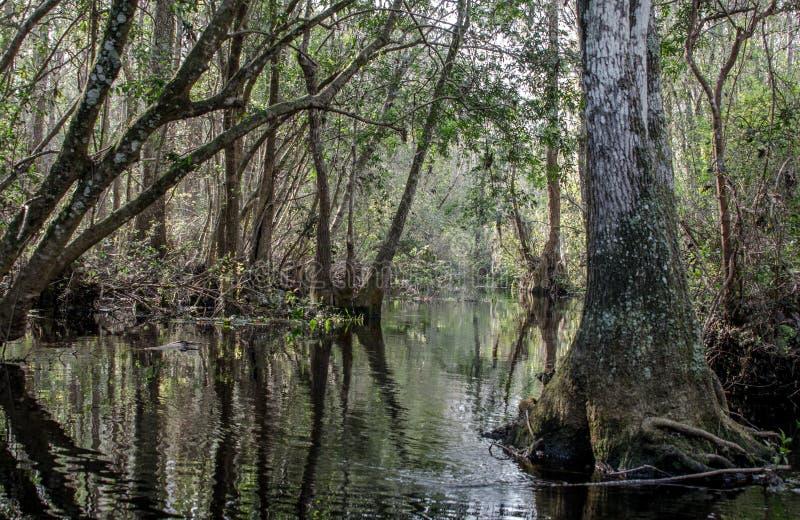 O rio reduz a fuga da canoa, reserva natural do nacional do pântano de Okefenokee fotos de stock royalty free