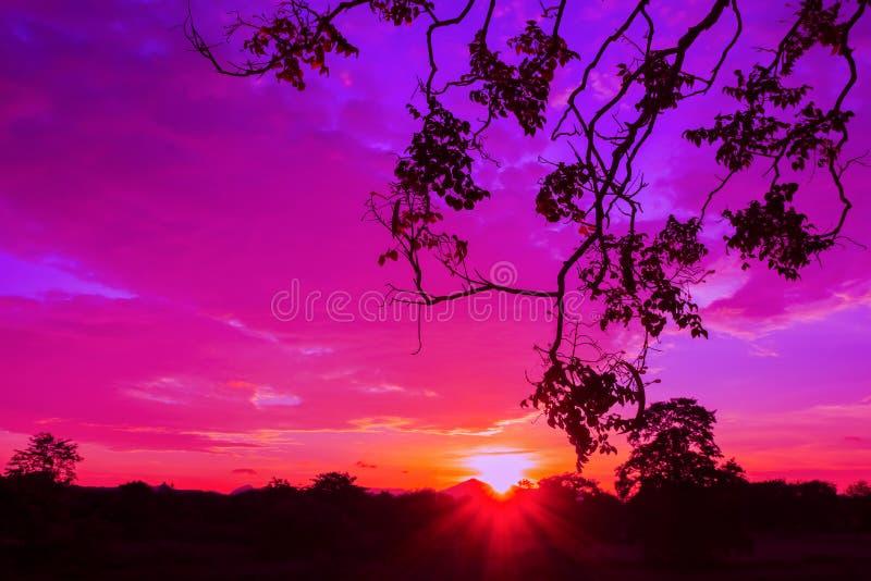 O rio reflexo colorido bonito da paisagem do por do sol e da água da árvore da silhueta no tempo crepuscular do céu com espaço da imagem de stock