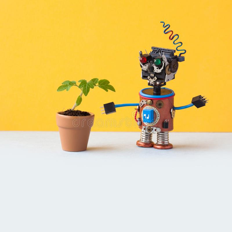 O robô explora uma planta verde viva em um potenciômetro de argila da flor Inteligência artificial contra a planta orgânica da vi fotografia de stock royalty free