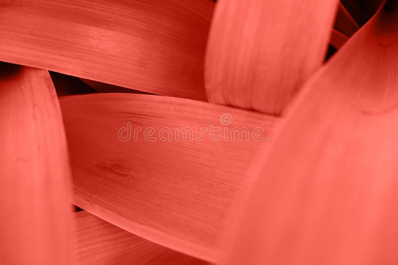O rosa alaranjado brilhante deixa a vista superior o fundo minimalistic fotografia de stock