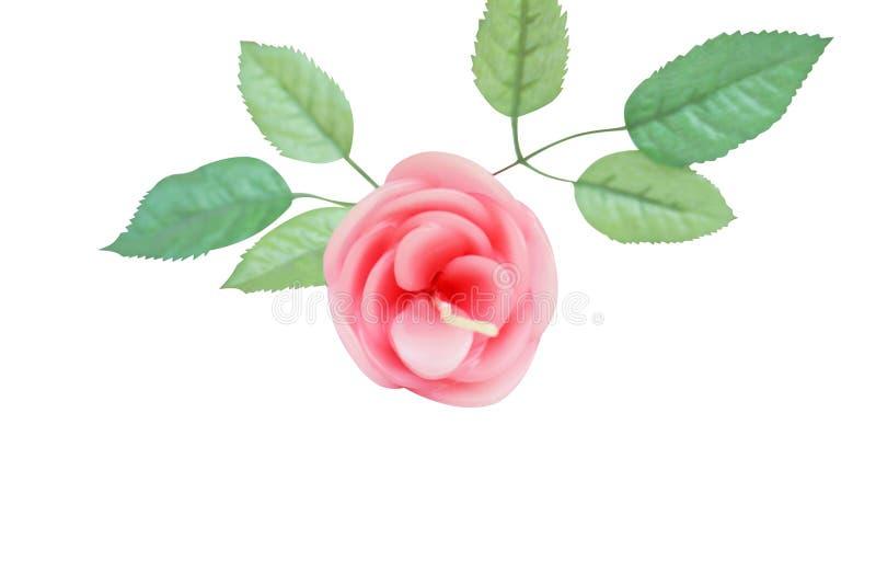 O rosa aumentou com as folhas isoladas no fundo branco, vela do aroma foto de stock