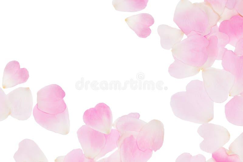 O rosa aumentou fundo cor-de-rosa das pétalas foto de stock royalty free
