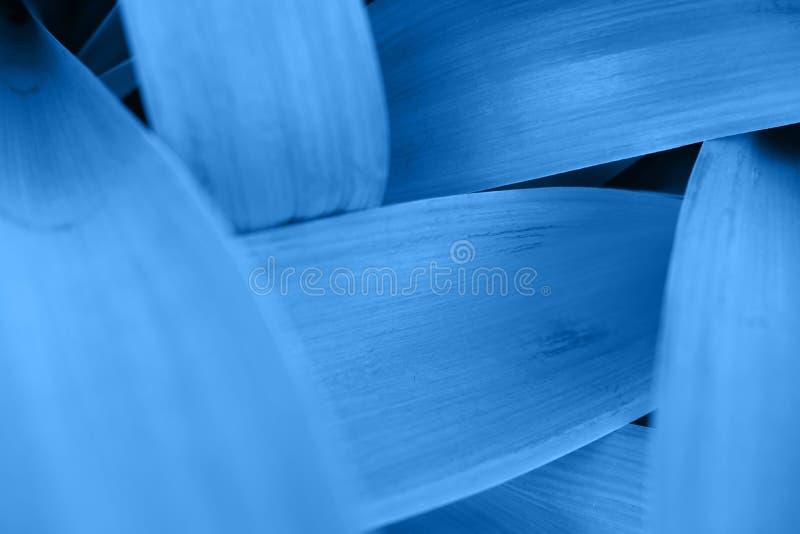 O rosa azul brilhante deixa a vista superior o fundo minimalistic fotografia de stock royalty free
