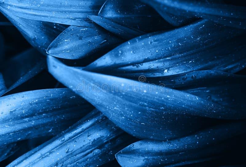 O rosa azul brilhante deixa a vista superior o fundo minimalistic foto de stock royalty free