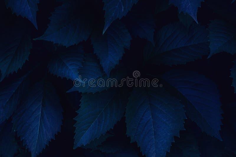 O rosa azul brilhante deixa a vista superior o fundo minimalistic foto de stock
