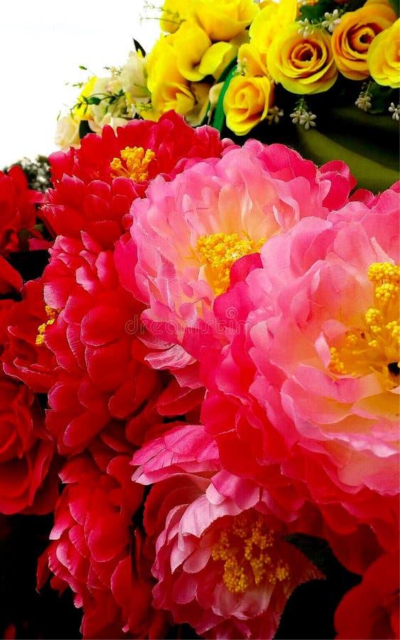 O rosa bonito floresce a foto imagens de stock