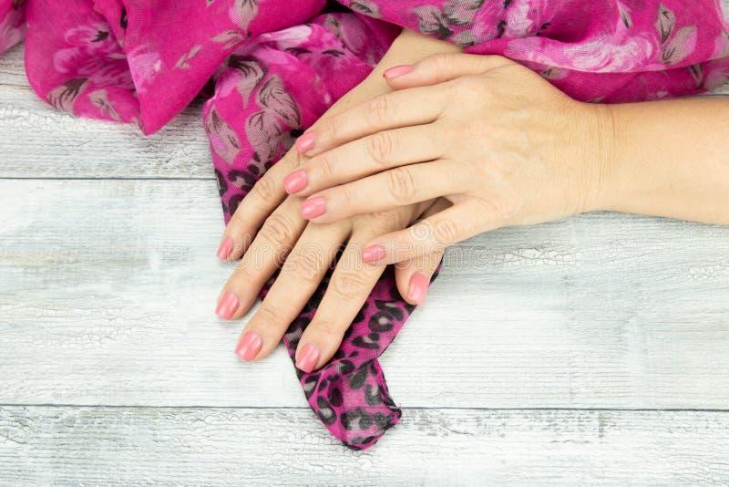 O rosa das mãos da mulher manicured nos pregos que guardam um sc bonito cor-de-rosa foto de stock
