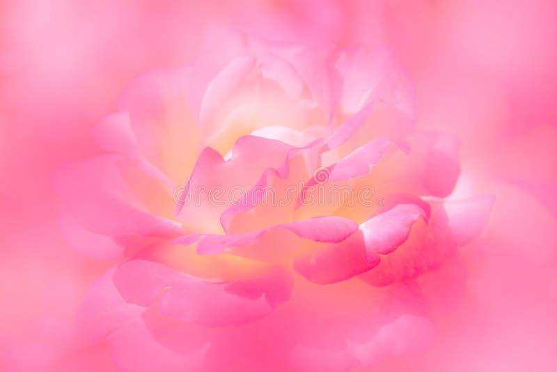 O rosa e a natureza amarela macia das pétalas cor-de-rosa abstraem o fundo ilustração do vetor