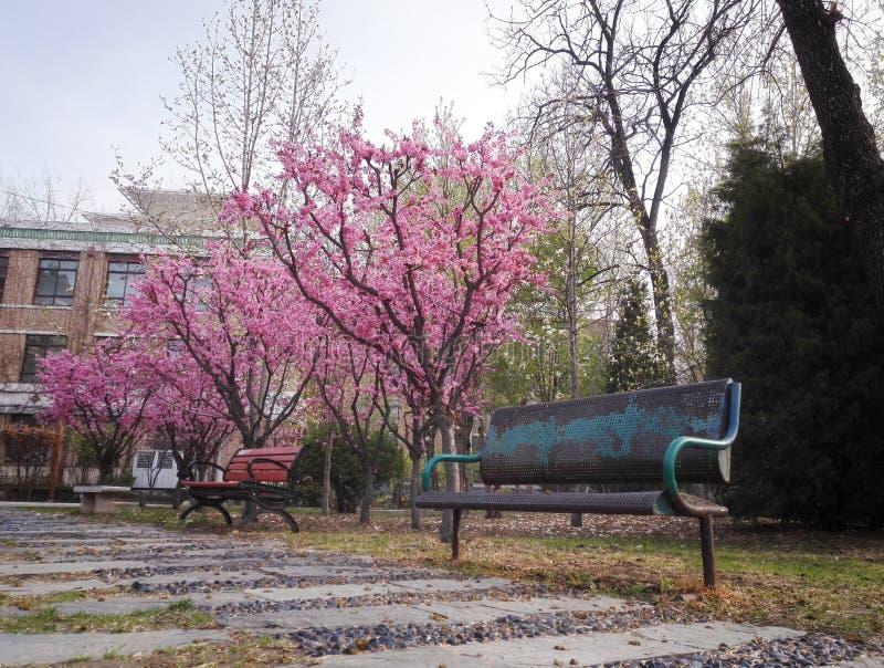 O rosa floresce jardim de flores fotos de stock