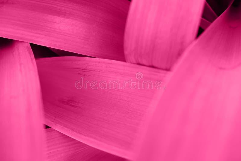 O rosa magenta brilhante deixa a vista superior o fundo minimalistic fotografia de stock royalty free