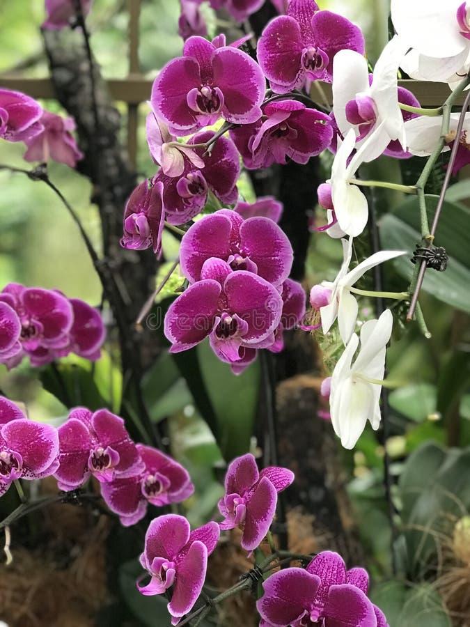 O roxo floresce jardim de flores da orquídea imagens de stock royalty free