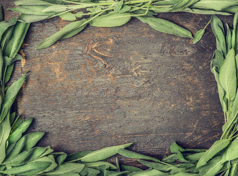 O sábio fresco sae no fundo de madeira rústico, quadro, vista superior, tonificada fotos de stock royalty free