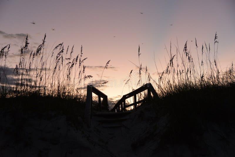 O ` s da libélula sai no crepúsculo e pulula a aveia do mar entre a duna de areia imagem de stock royalty free
