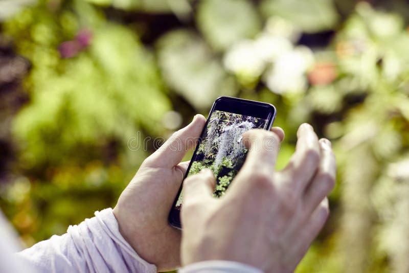 O ` s do homem da opinião do close up entrega usando um telefone celular, tomando a foto de flores das árvores e escalando na tel imagem de stock