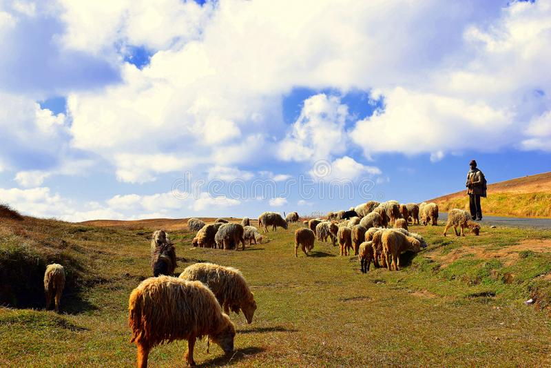 O ` s do pastor com seus carneiros fotografia de stock royalty free