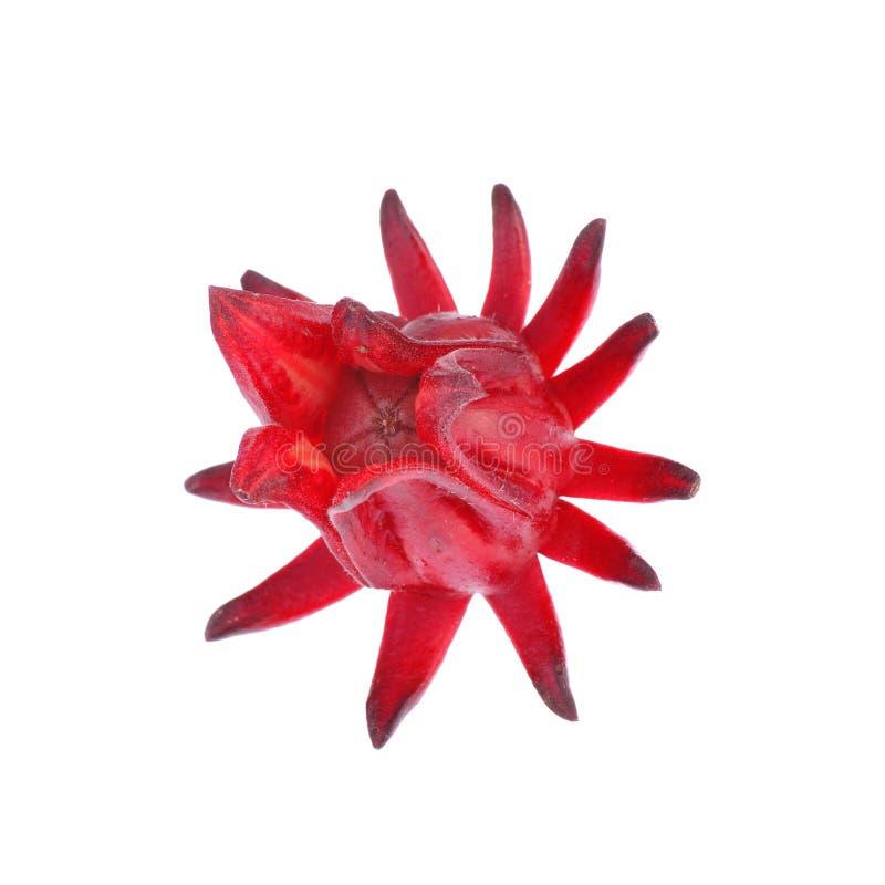 O sabdariffa ou o roselle do hibiscus frutificam no fundo branco fotos de stock royalty free