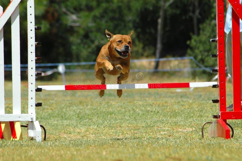 O salto do cão imagens de stock royalty free