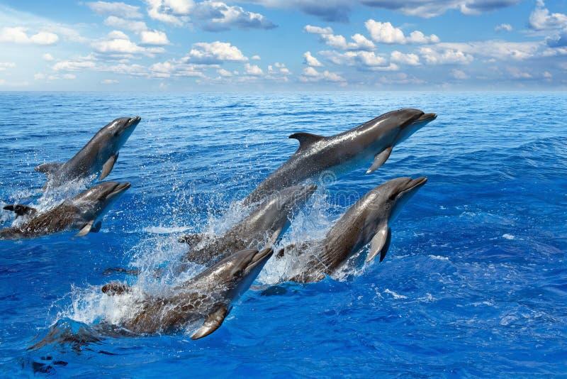 O salto do golfinho imagem de stock royalty free