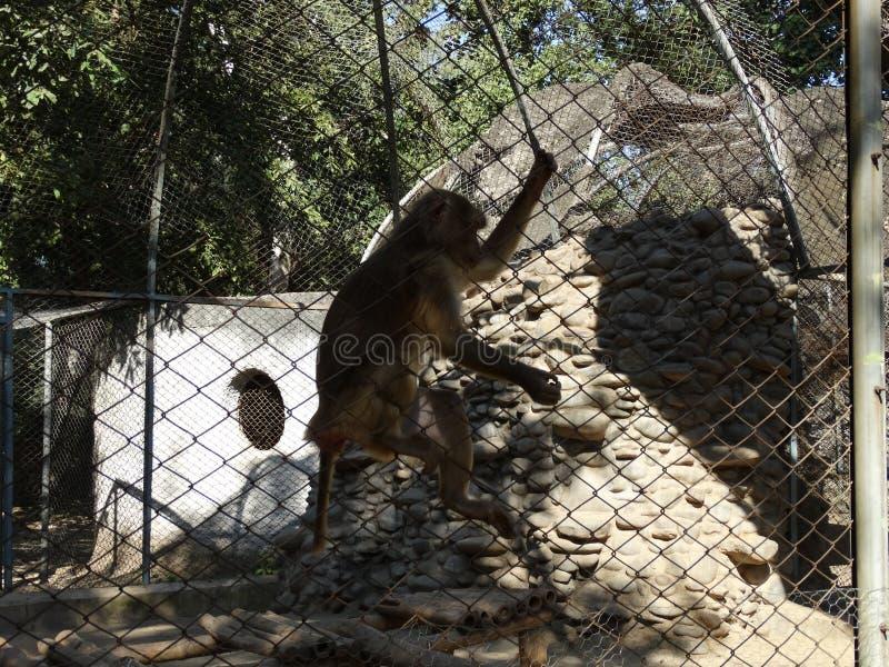 O salto do macaco imagens de stock royalty free