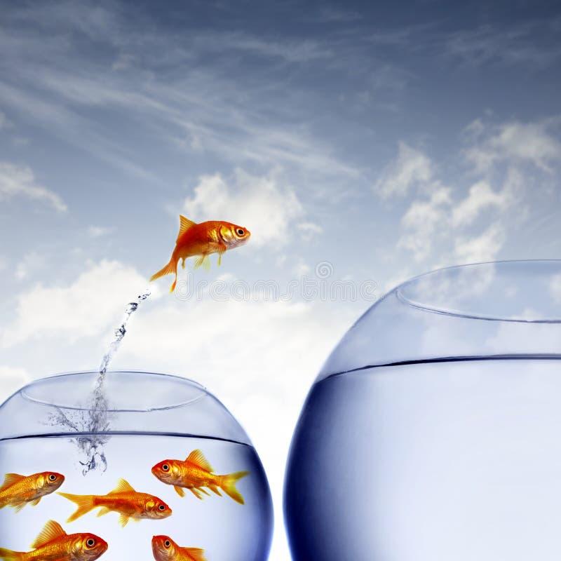 O salto do peixe dourado imagens de stock