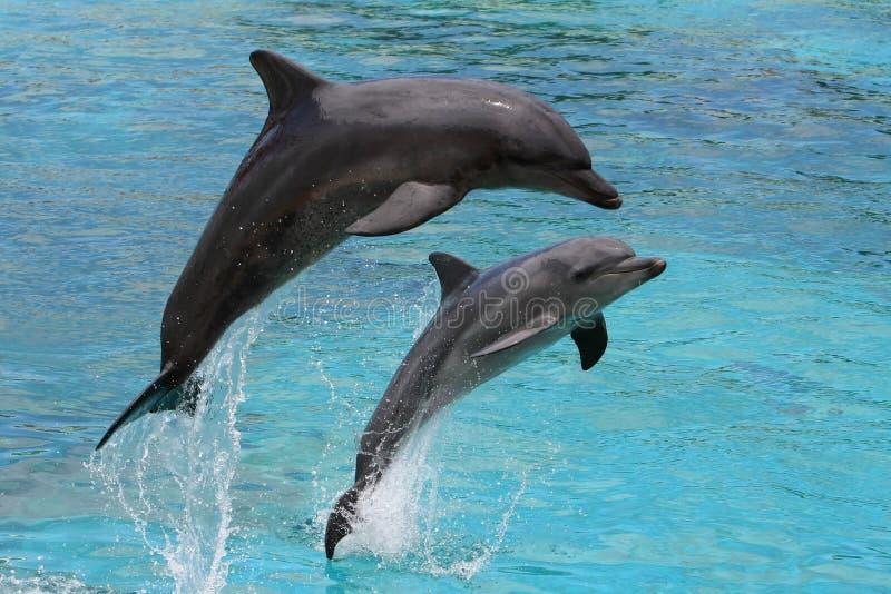 O salto dos golfinhos imagens de stock royalty free