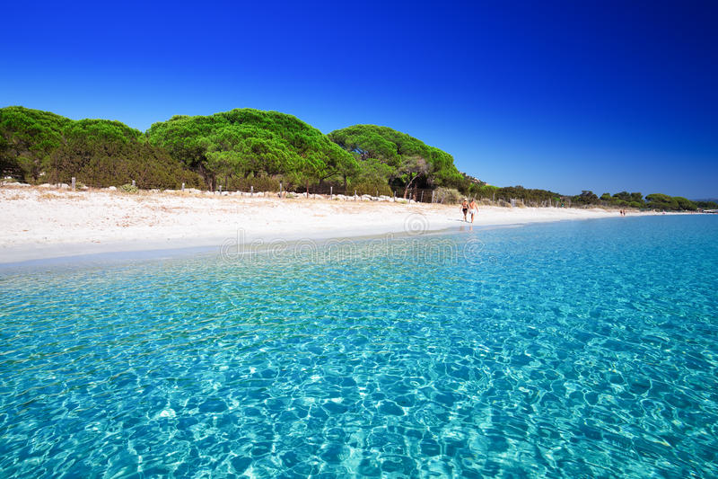 O Sandy Beach de Palombaggia com pinheiros e os azuis celestes cancelam a água, Córsega, França foto de stock royalty free