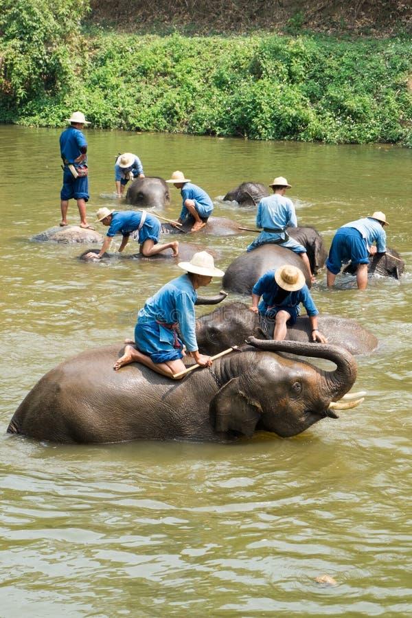 O santuário do elefante da mostra fotografia de stock royalty free