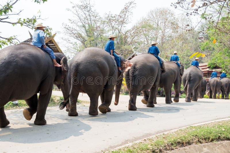 O santuário do elefante da mostra imagens de stock royalty free