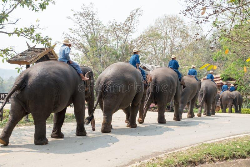 O santuário do elefante da mostra foto de stock royalty free