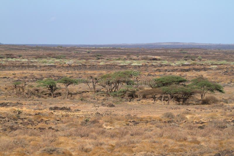 O savana e o bushland em Kenya imagem de stock