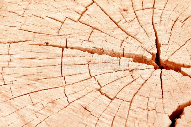 O seção transversal de madeira soa o marrom da textura da natureza com linha rachou testes padrões do fundo do tronco de árvore imagem de stock
