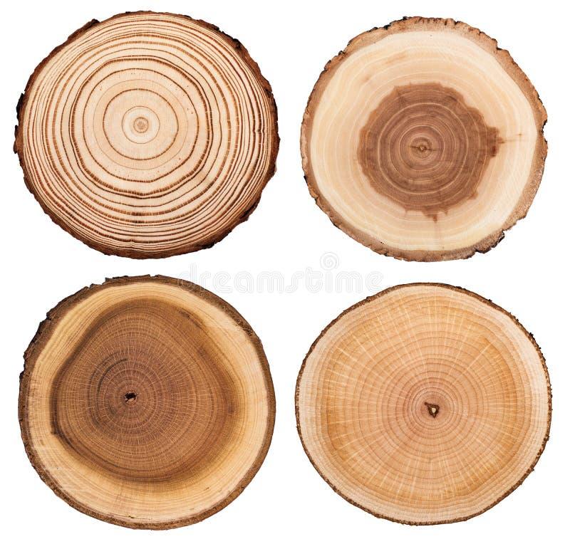 O seção transversal do tronco de árvore que mostra anéis de crescimento ajustou-se isolado no fundo branco foto de stock